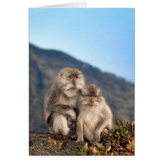 猿のカップルカード カード