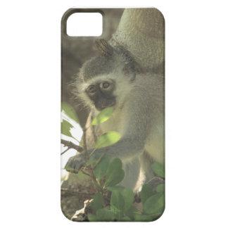 猿の例 iPhone SE/5/5s ケース