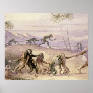 猿の方法そして習慣 ポスター