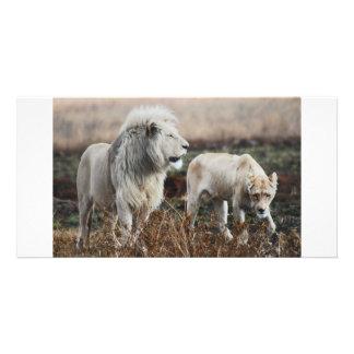 王として南アフリカ共和国のライオン カード