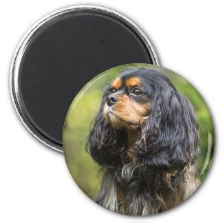 王室ので無頓着なチャールズ王スパニエル犬 マグネット
