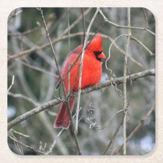 王室ので赤い(鳥)ショウジョウコウカンチョウの紙のコースター スクエアペーパーコースター