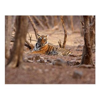 王室のなベンガルトラ、Ranthambhorの国立公園、 ポストカード