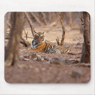 王室のなベンガルトラ、Ranthambhorの国立公園、 マウスパッド
