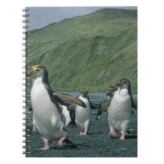 王室のなペンギン(Eudyptesのschlegelii)の風土病、 ノートブック