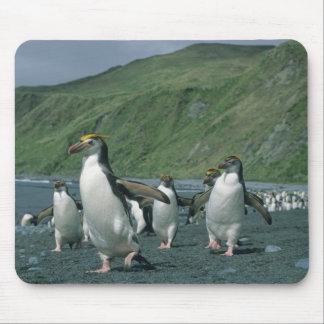 王室のなペンギン(Eudyptesのschlegelii)の風土病、 マウスパッド