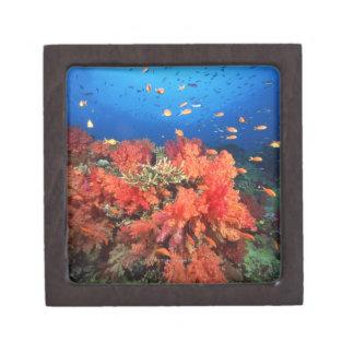 珊瑚および魚 ギフトボックス