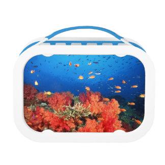 珊瑚および魚 ランチボックス