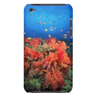 珊瑚および魚 Case-Mate iPod TOUCH ケース