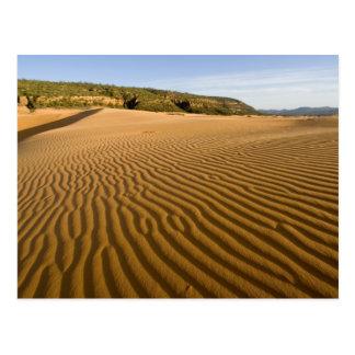 珊瑚のピンクの砂2でさざ波および砂丘を紙やすりで磨いて下さい ポストカード