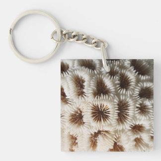 珊瑚の写真 キーホルダー
