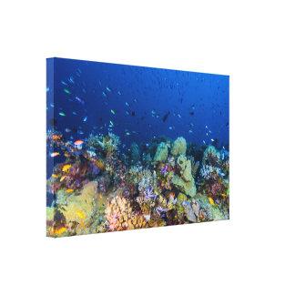 珊瑚の海の熱帯魚及び礁-キャンバスプリント キャンバスプリント