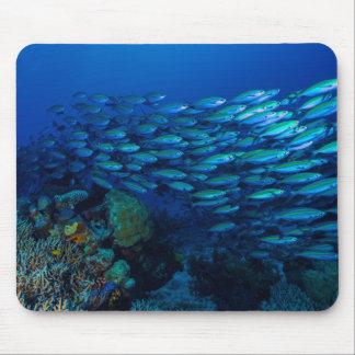珊瑚海のマウスパッドの熱帯魚 マウスパッド