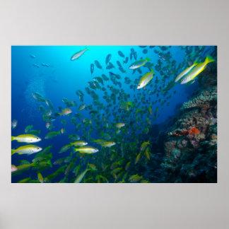 珊瑚海の熱帯魚 ポスター