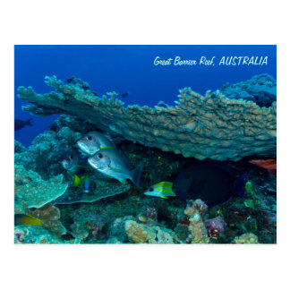 珊瑚海の郵便はがきの熱帯魚 ポストカード