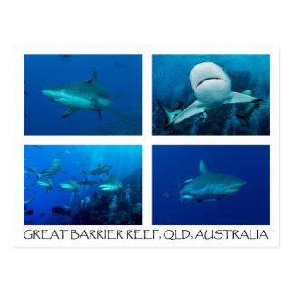 珊瑚海の郵便はがき-礁の鮫 ポストカード