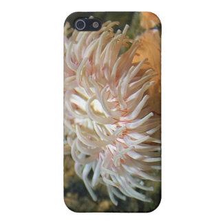 珊瑚礁のアネモネのiPhoneの場合 iPhone SE/5/5sケース