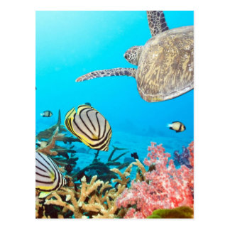 珊瑚礁のカメNaturescape ポストカード