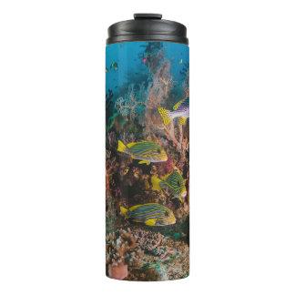 珊瑚礁のタンブラー タンブラー