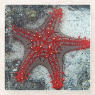 珊瑚礁のヒトデイバラの冠 ガラスコースター