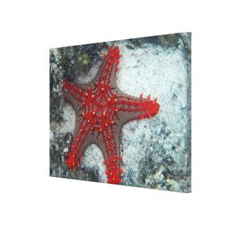 珊瑚礁のヒトデイバラの冠 キャンバスプリント