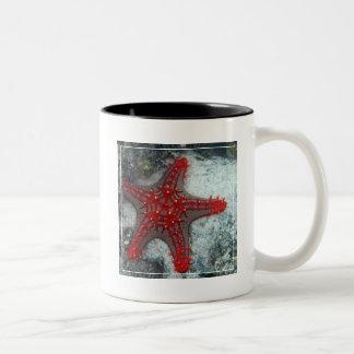 珊瑚礁のヒトデイバラの冠 ツートーンマグカップ