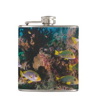 珊瑚礁のフラスコ フラスク