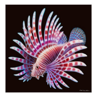 珊瑚礁のミノカサゴポスター ポスター