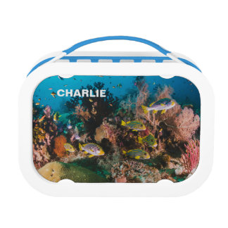 珊瑚礁の名前をカスタムするのお弁当箱 ランチボックス