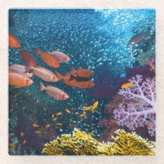 珊瑚礁の景色|のBigeyeかギョロ目目 ガラスコースター