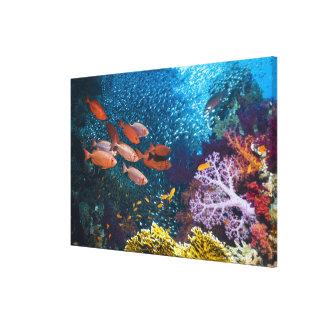 珊瑚礁の景色|のBigeyeかギョロ目目 キャンバスプリント