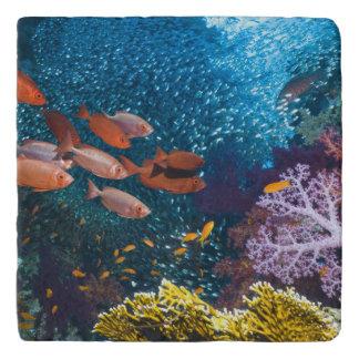 珊瑚礁の景色 のBigeyeかギョロ目目 トリベット