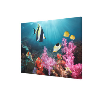 珊瑚礁の景色|のMoorishの偶像 キャンバスプリント
