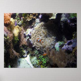 珊瑚礁の水中ポスター ポスター
