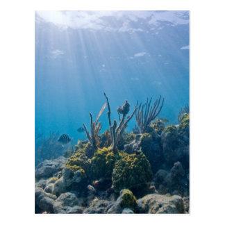 珊瑚礁の海洋生物 ポストカード