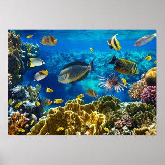 珊瑚礁の熱帯魚の写真 プリント