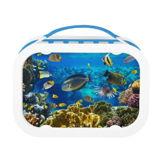 珊瑚礁の熱帯魚の写真 ランチボックス