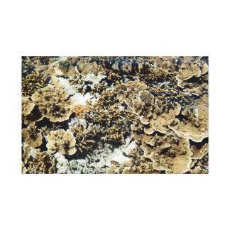 珊瑚礁の眺め キャンバスプリント
