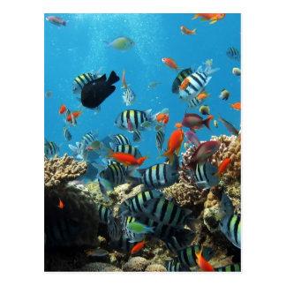 珊瑚礁の魚Naturescape ポストカード