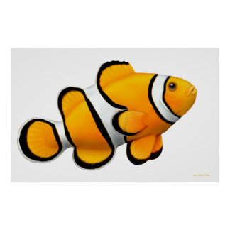 珊瑚礁のPercula Clownfishポスター ポスター