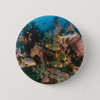 珊瑚礁ボタン 5.7CM 丸型バッジ