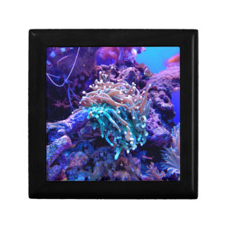 珊瑚礁 ギフトボックス