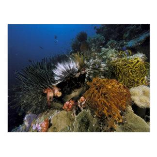 珊瑚礁 ポストカード