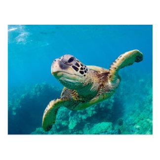 珊瑚礁|Hawaiiに泳いでいる緑のウミガメ ポストカード