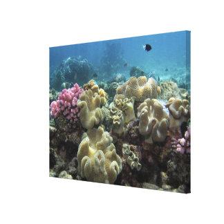 珊瑚、Agincourt礁、グレート・バリア・リーフ、 キャンバスプリント