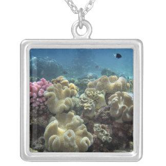 珊瑚、Agincourt礁、グレート・バリア・リーフ、 シルバープレートネックレス