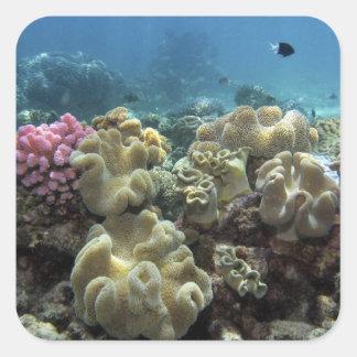 珊瑚、Agincourt礁、グレート・バリア・リーフ、 スクエアシール