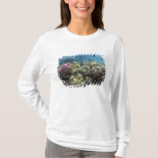 珊瑚、Agincourt礁、グレート・バリア・リーフ、 Tシャツ