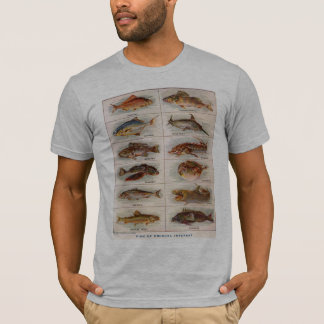 珍しい興味ウェブスター1911年のヴィンテージの魚 Tシャツ