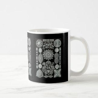 珪藻植物 コーヒーマグカップ